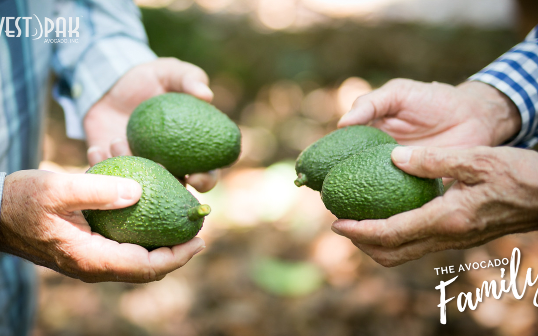 """Impressed By The Press Coverage of West Pak's """"The Avocado Family"""""""