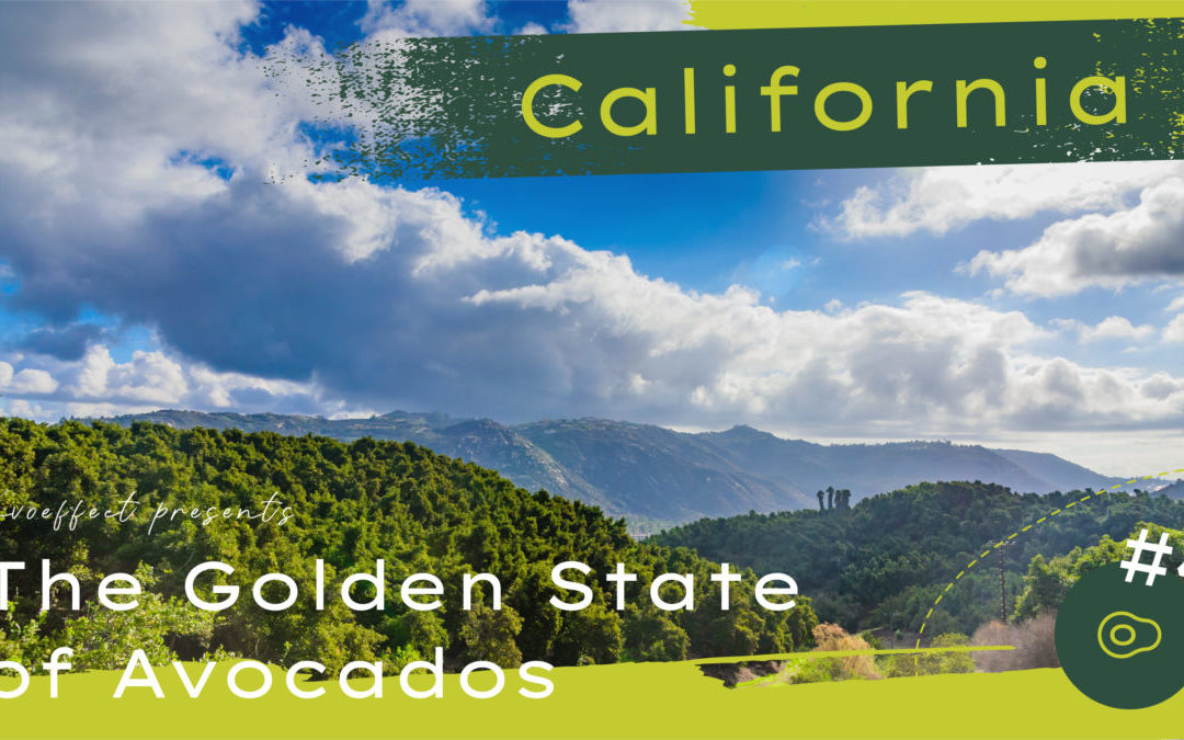 A Look at The Avo Effect Episode #4 – California: The Golden State of Avocados